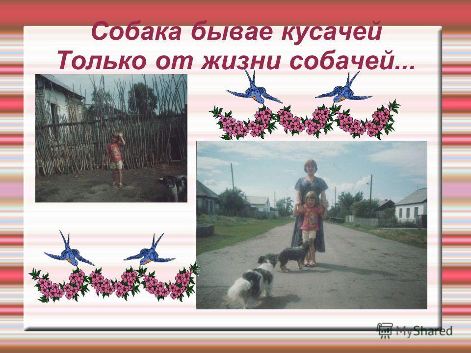 Собака бывае кусачей Только от жизни собачей...