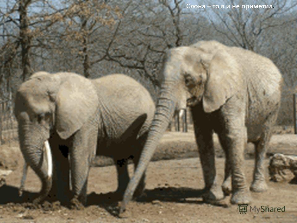 Слона – то я и не приметил.