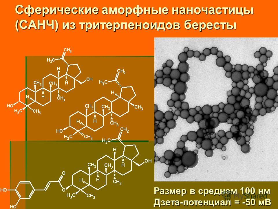Сферические аморфные наночастицы (САНЧ) из тритерпеноидов бересты Размер в среднем 100 нм Дзета-потенциал = -50 мВ