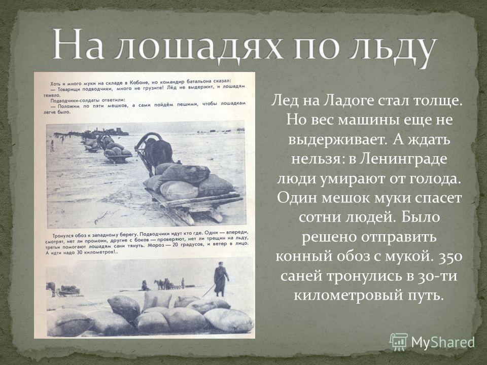 Лед на Ладоге стал толще. Но вес машины еще не выдерживает. А ждать нельзя: в Ленинграде люди умирают от голода. Один мешок муки спасет сотни людей. Было решено отправить конный обоз с мукой. 350 саней тронулись в 30-ти километровый путь.
