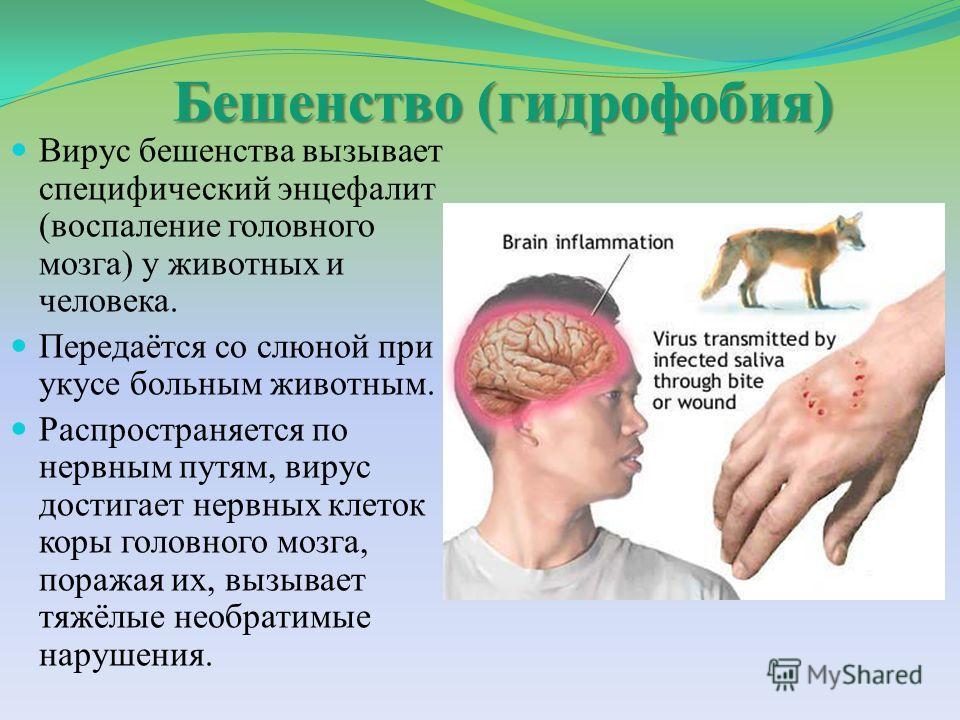 Бешенство (гидрофобия) Вирус бешенства вызывает специфический энцефалит (воспаление головного мозга) у животных и человека. Передаётся со слюной при укусе больным животным. Распространяется по нервным путям, вирус достигает нервных клеток коры головн