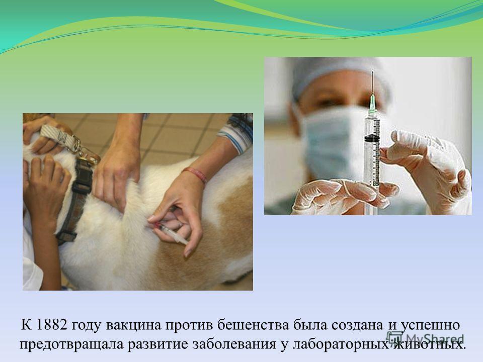 К 1882 году вакцина против бешенства была создана и успешно предотвращала развитие заболевания у лабораторных животных.