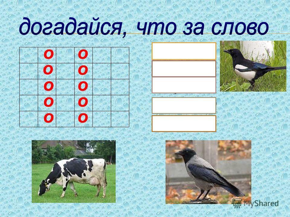Приключение 1 СОБЕРИ МОНЕТКИ (словарная работа) р. бота о а е К. рова С. лома я