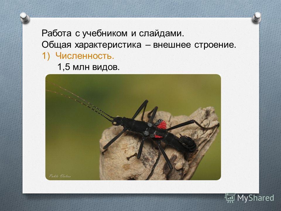 Работа с учебником и слайдами. Общая характеристика – внешнее строение. 1)Численность. 1,5 млн видов.