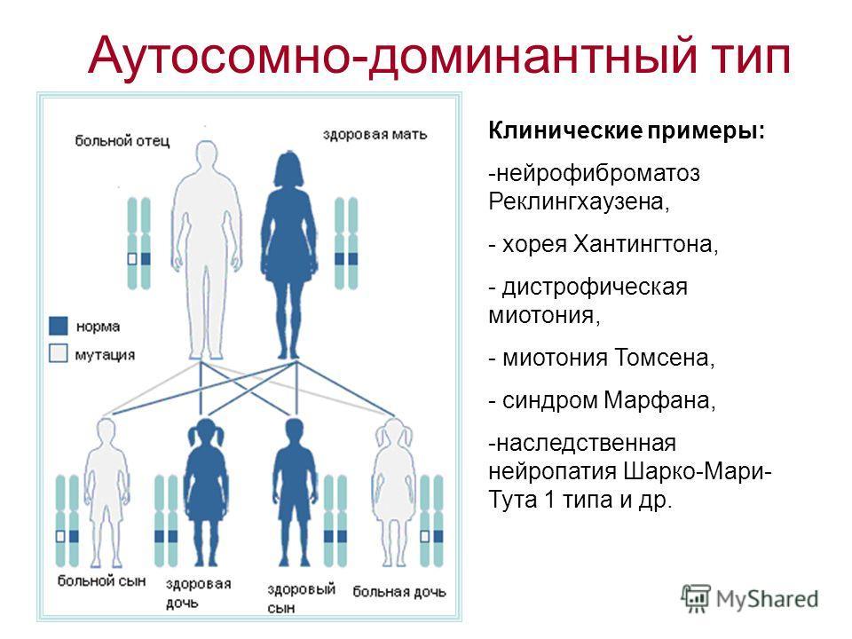 Аутосомно-доминантный тип Клинические примеры: -нейрофиброматоз Реклингхаузена, - хорея Хантингтона, - дистрофическая миотония, - миотония Томсена, - синдром Марфана, -наследственная нейропатия Шарко-Мари- Тута 1 типа и др.