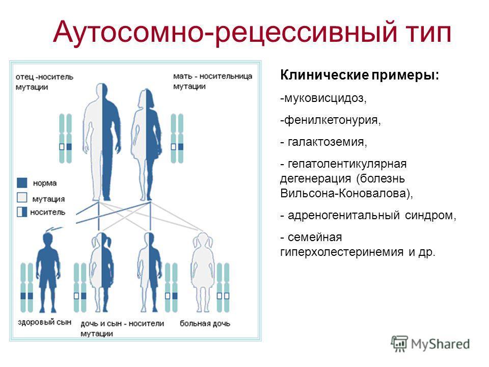 Аутосомно-рецессивный тип Клинические примеры: -муковисцидоз, -фенилкетонурия, - галактоземия, - гепатолентикулярная дегенерация (болезнь Вильсона-Коновалова), - адреногенитальный синдром, - семейная гиперхолестеринемия и др.