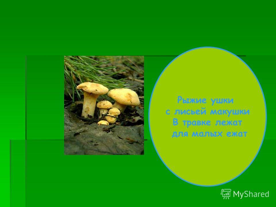 В лесу – чудо: растет блюдо! Дождь пройдет – воды нальет. Хороша водица – ежику напиться.