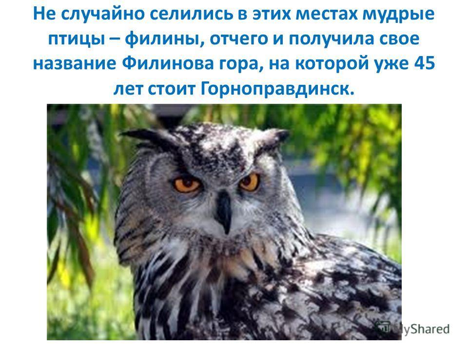 Не случайно селились в этих местах мудрые птицы – филины, отчего и получила свое название Филинова гора, на которой уже 45 лет стоит Горноправдинск.