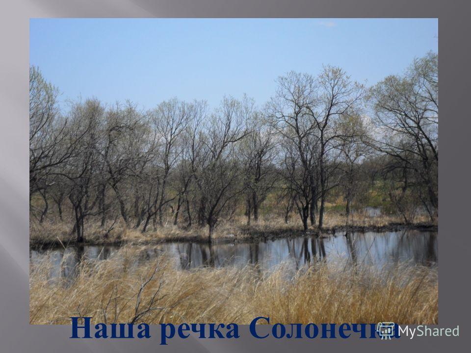 Наша речка Солонечка