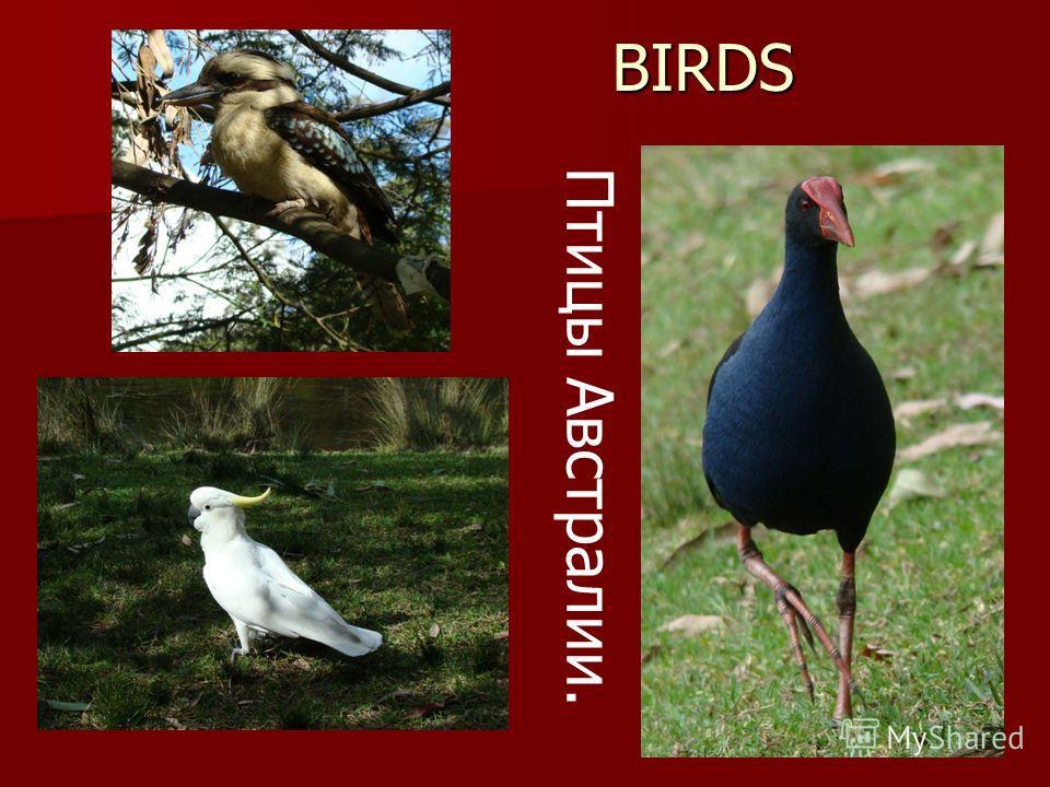 BIRDS BIRDS Птицы Австралии.