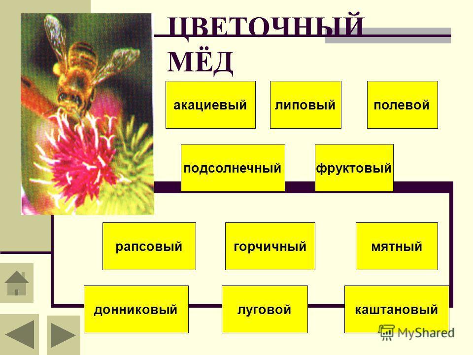 ЦВЕТОЧНЫЙ МЁД акациевыйлиповыйполевой подсолнечныйфруктовый каштановый рапсовыйгорчичный донниковый мятный луговой