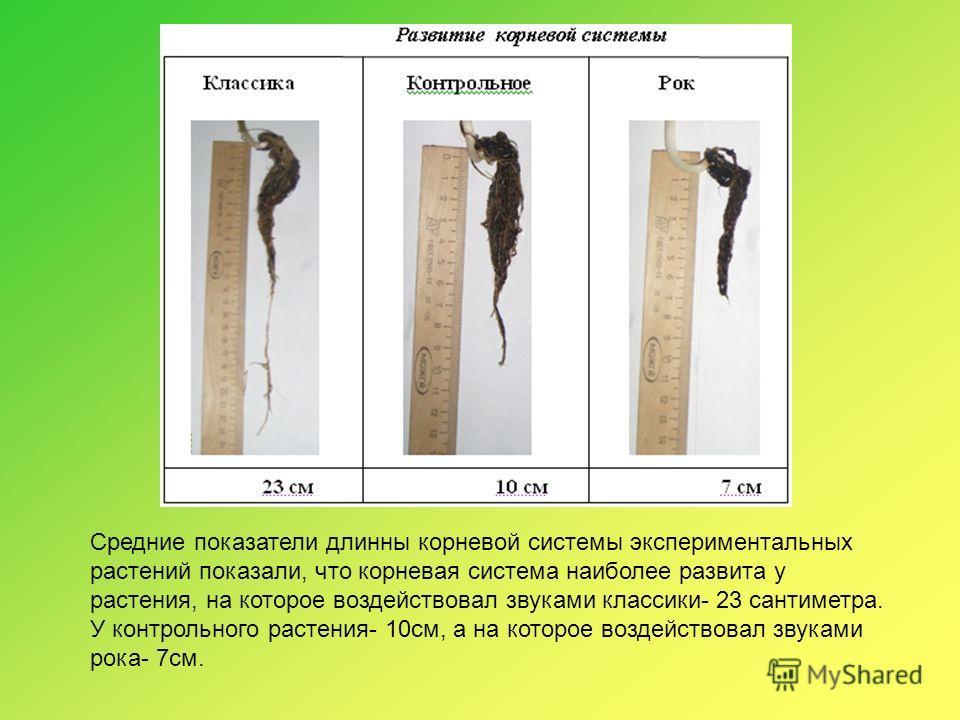 Средние показатели длинны корневой системы экспериментальных растений показали, что корневая система наиболее развита у растения, на которое воздействовал звуками классики- 23 сантиметра. У контрольного растения- 10см, а на которое воздействовал звук