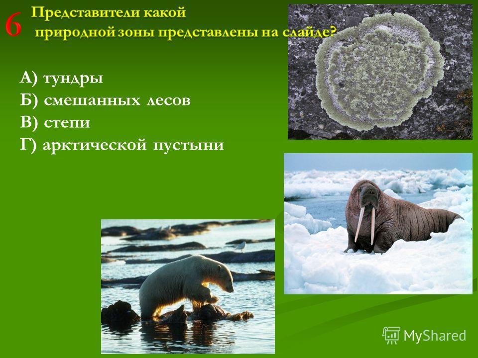 А) тундры Б) смешанных лесов В) степи Г) арктической пустыни
