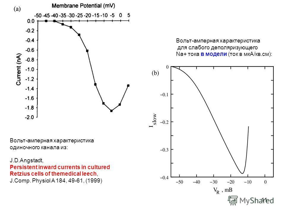 11 Вольт-амперная характеристика одиночного канала из: J.D.Angstadt, Persistent inward currents in cultured Retzius cells of themedical leech, J.Comp. Physiol A 184, 49-61, (1999) Вольт-амперная характеристика для слабого деполяризующего Na+ тока в м