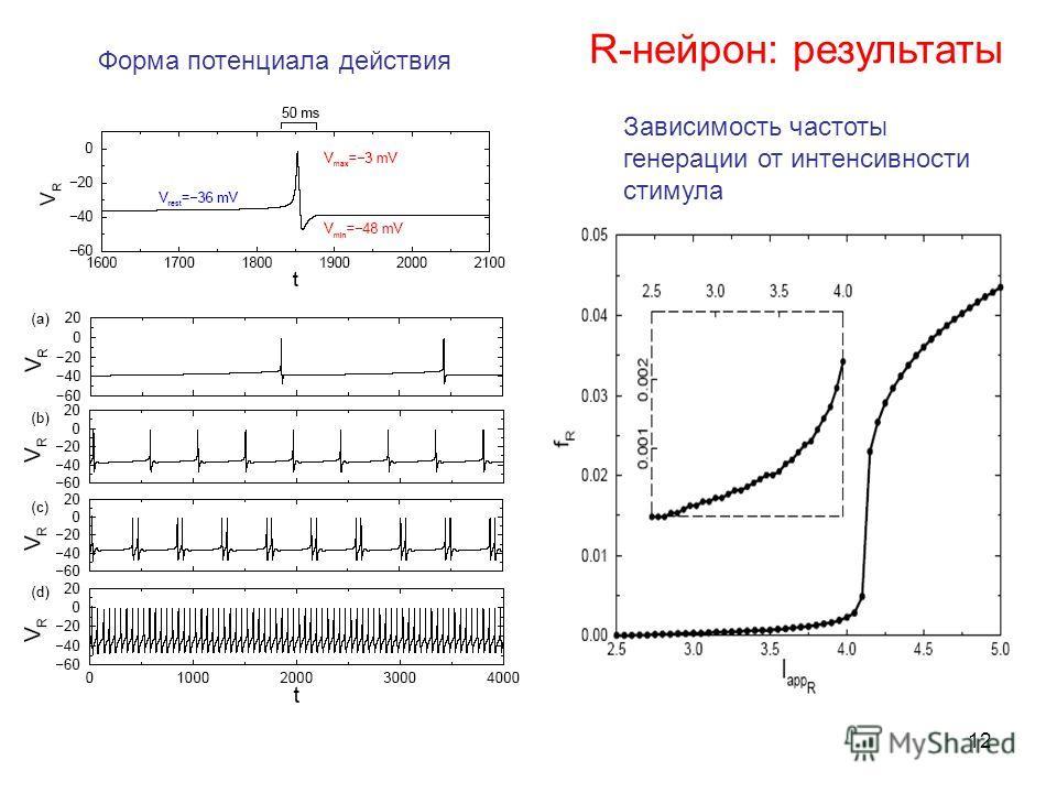 12 R-нейрон: результаты Зависимость частоты генерации от интенсивности стимула Форма потенциала действия