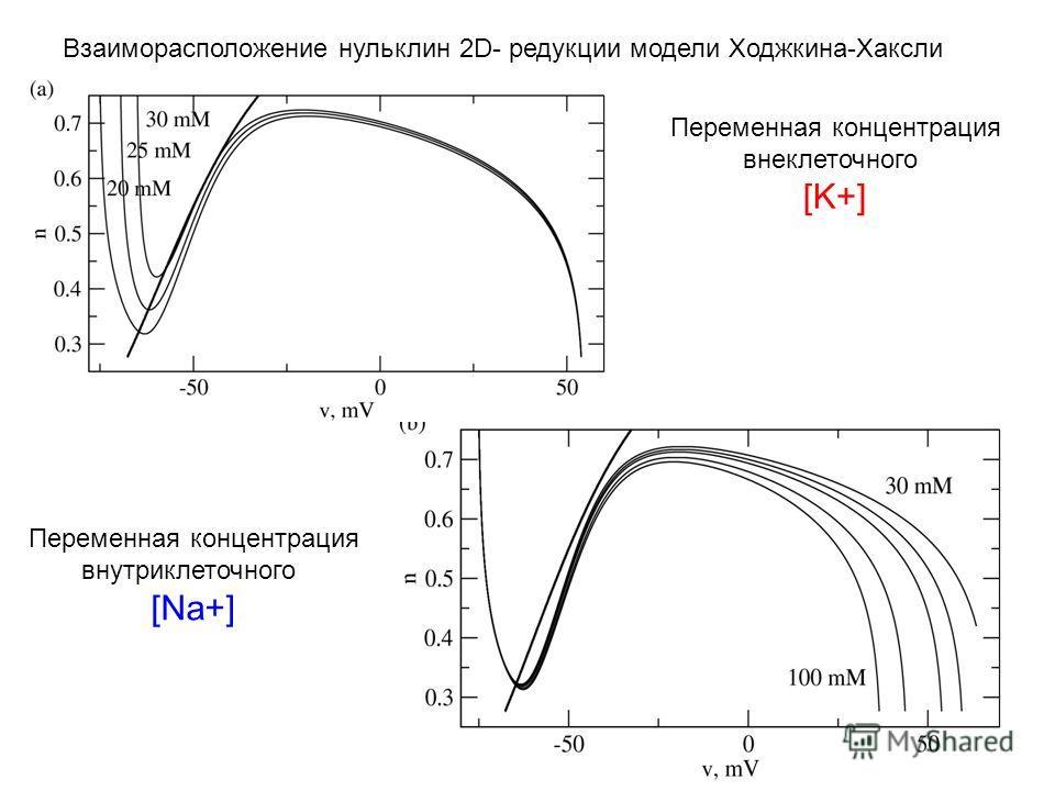 38 Переменная концентрация внеклеточного [K+] Переменная концентрация внутриклеточного [Na+] Взаиморасположение нульклин 2D- редукции модели Ходжкина-Хаксли