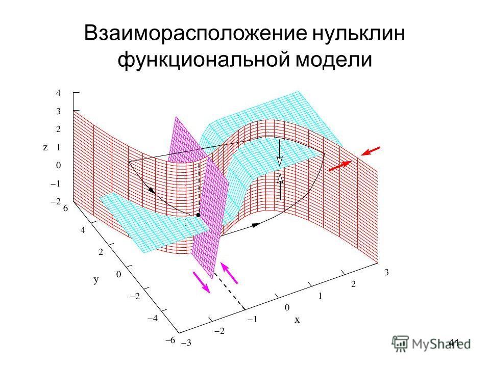 41 Взаиморасположение нульклин функциональной модели