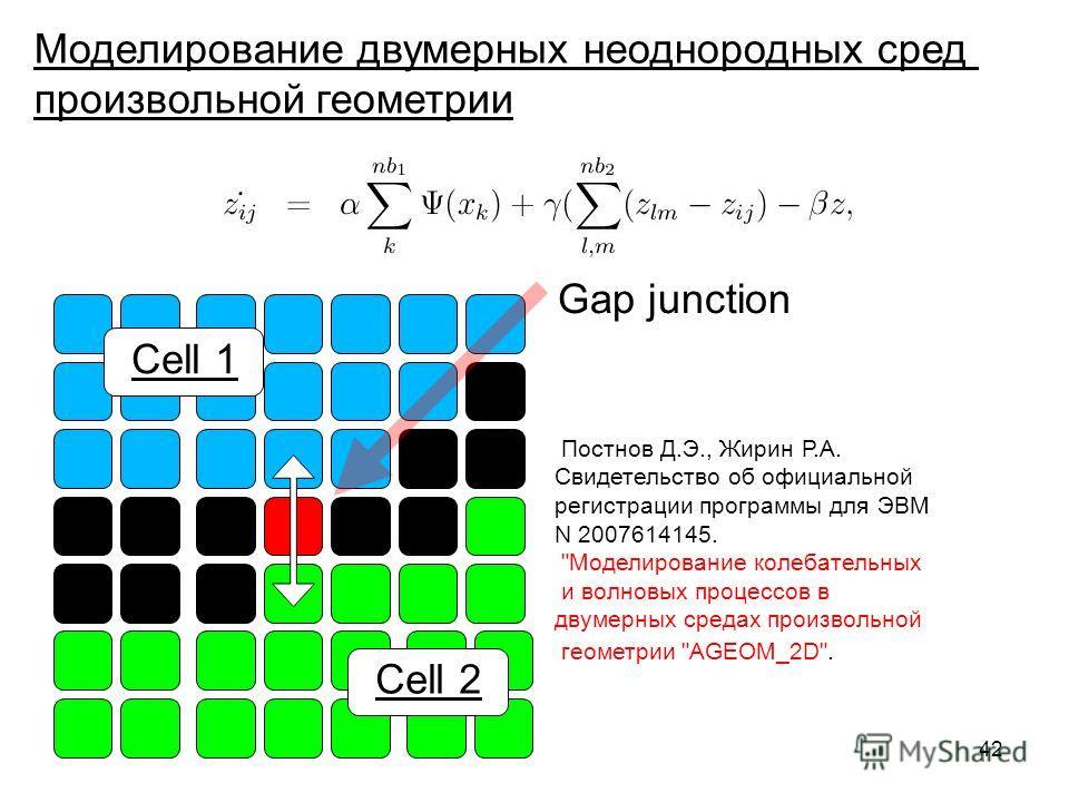 42 Gap junction Cell 1 Cell 2 Моделирование двумерных неоднородных сред произвольной геометрии Постнов Д.Э., Жирин Р.А. Cвидетельство об официальной регистрации программы для ЭВМ N 2007614145.