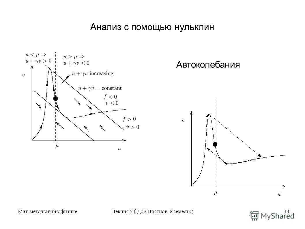 Мат. методы в биофизикеЛекция 5 ( Д.Э.Постнов, 8 семестр)14 Анализ с помощью нульклин Автоколебания
