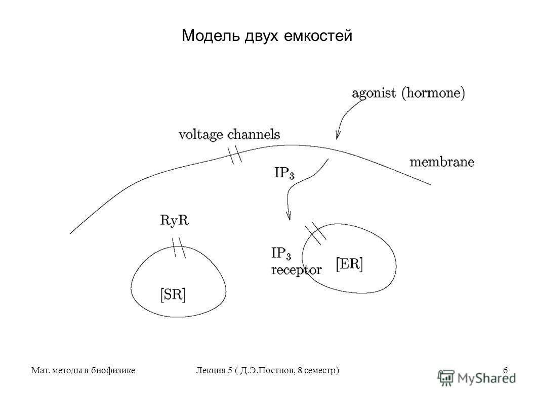 Мат. методы в биофизикеЛекция 5 ( Д.Э.Постнов, 8 семестр)6 Модель двух емкостей