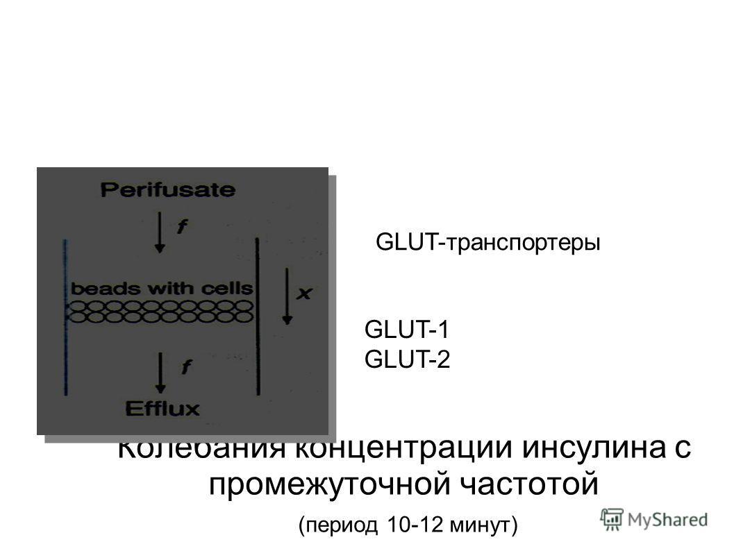 Колебания концентрации инсулина с промежуточной частотой (период 10-12 минут) GLUT-транспортеры GLUT-1 GLUT-2