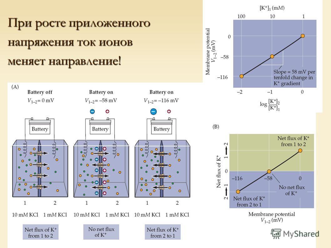При росте приложенного напряжения ток ионов меняет направление!