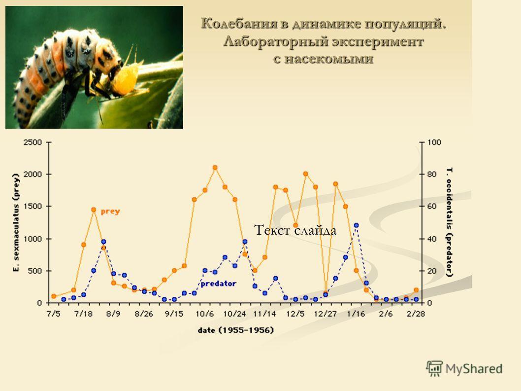 Колебания в динамике популяций. Лабораторный эксперимент с насекомыми Текст слайда
