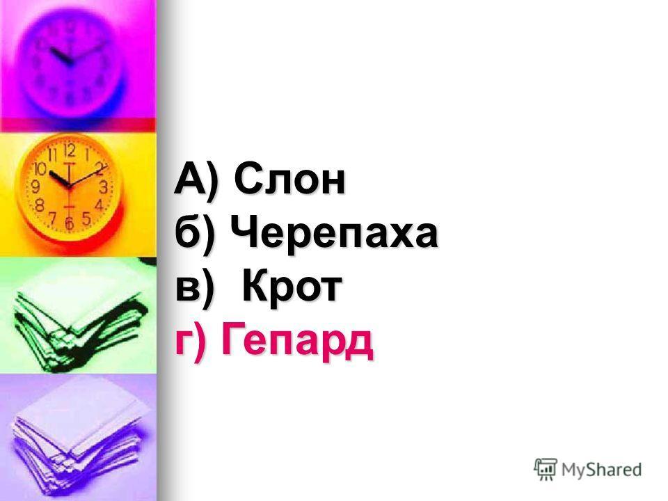А) Слон б) Черепаха в) Крот г) Гепард