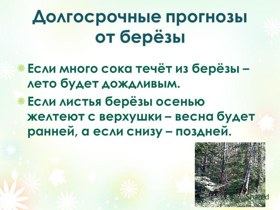 Если много сока течёт из берёзы – лето будет дождливым. Если листья берёзы осенью желтеют с верхушки – весна будет ранней, а если снизу – поздней.