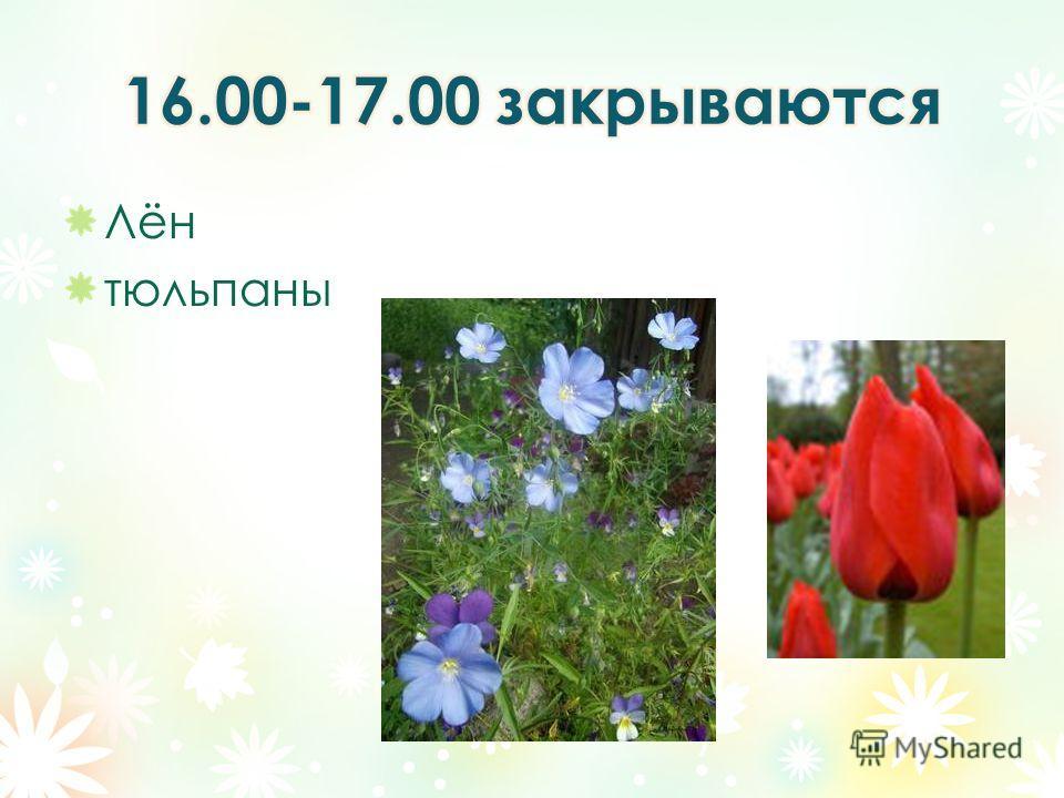 Лён тюльпаны