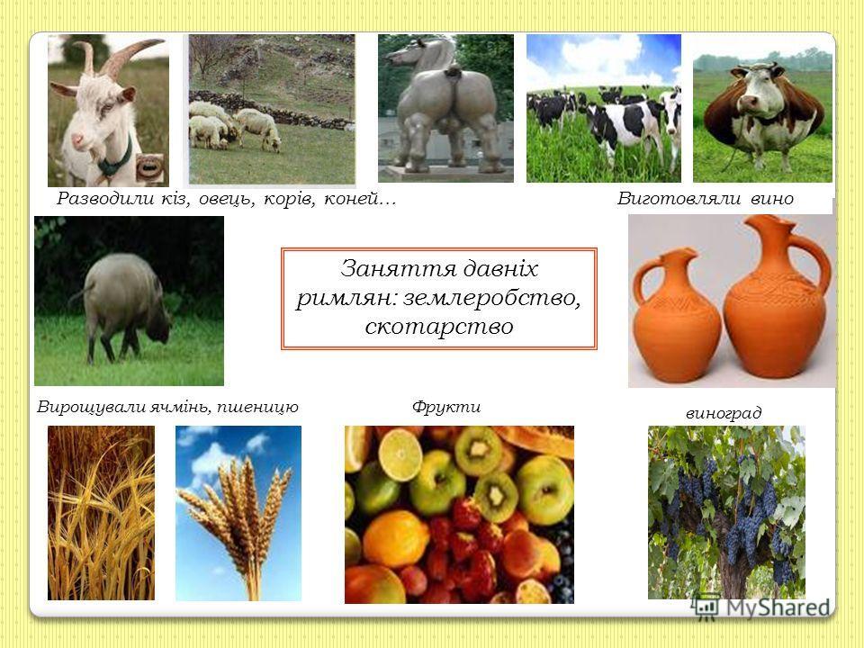 Заняття давніх римлян: землеробство, скотарство Разводили кіз, овець, корів, коней…Виготовляли вино Вирощували ячмінь, пшеницюФрукти виноград
