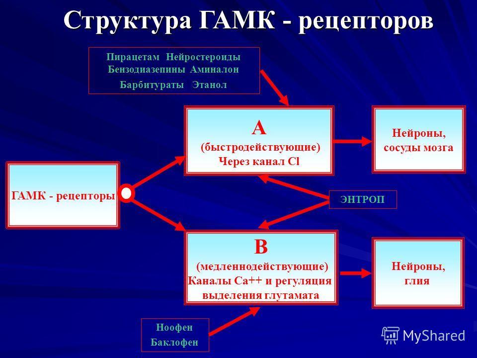 Структура ГАМК - рецепторов ГАМК - рецепторы А (быстродействующие) Через канал Cl B (медленнодействующие) Каналы Ca++ и регуляция выделения глутамата Нейроны, сосуды мозга Нейроны, глия Пирацетам Нейростероиды Бензодиазепины Аминалон Барбитураты Этан