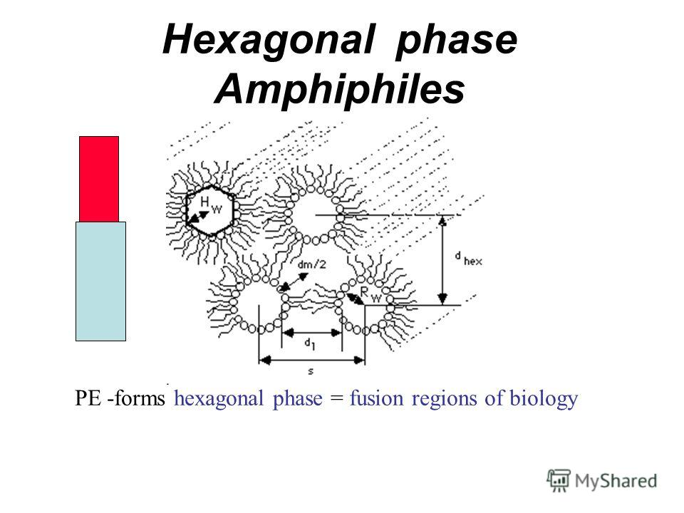 Hexagonal phase Amphiphiles PE -forms hexagonal phase = fusion regions of biology