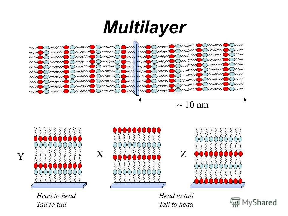 Multilayer ~ 10 nm Head to head Tail to tail Head to tail Tail to head X Y Z