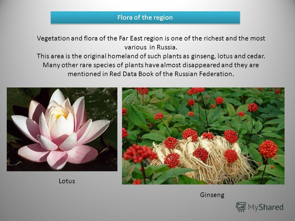 Flora of the region Vegetation and flora of the Far East region is one of the richest and the most various in Russia. This area is the original homeland of such plants as ginseng, lotus and cedar. Many other rare species of plants have almost disappe