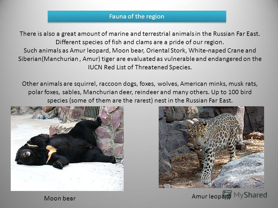 There is also a great amount of marine and terrestrial animals in the Russian Far East. Different species of fish and clams are a pride of our region. Such animals as Amur leopard, Moon bear, Oriental Stork, White-naped Crane and Siberian(Manchurian,