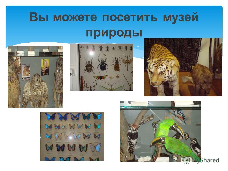 Вы можете посетить музей природы