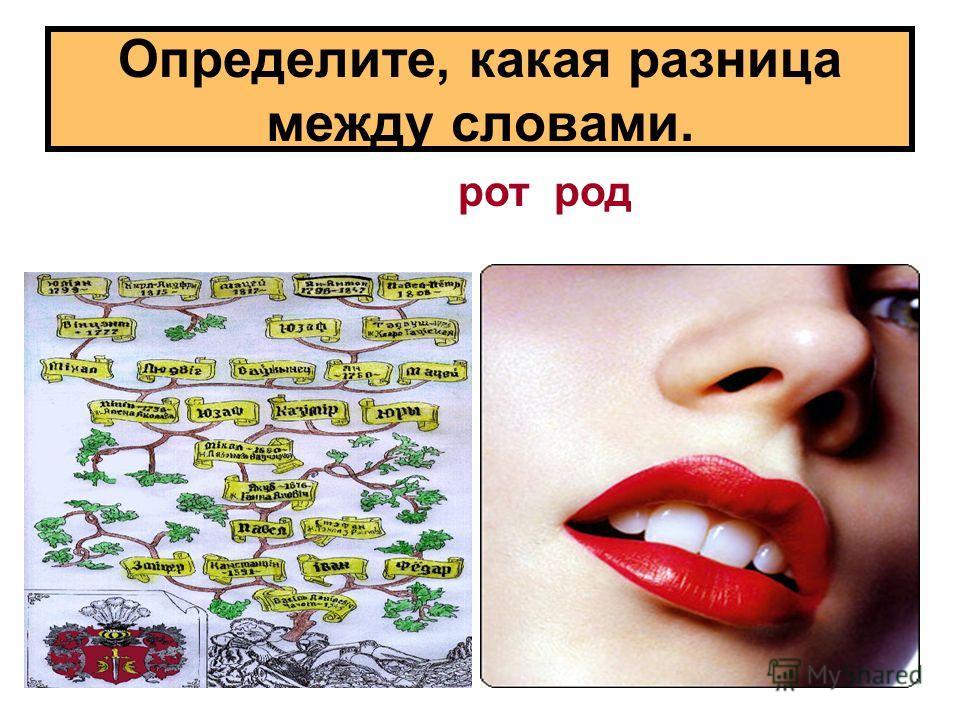 Определите, какая разница между словами. ротрод
