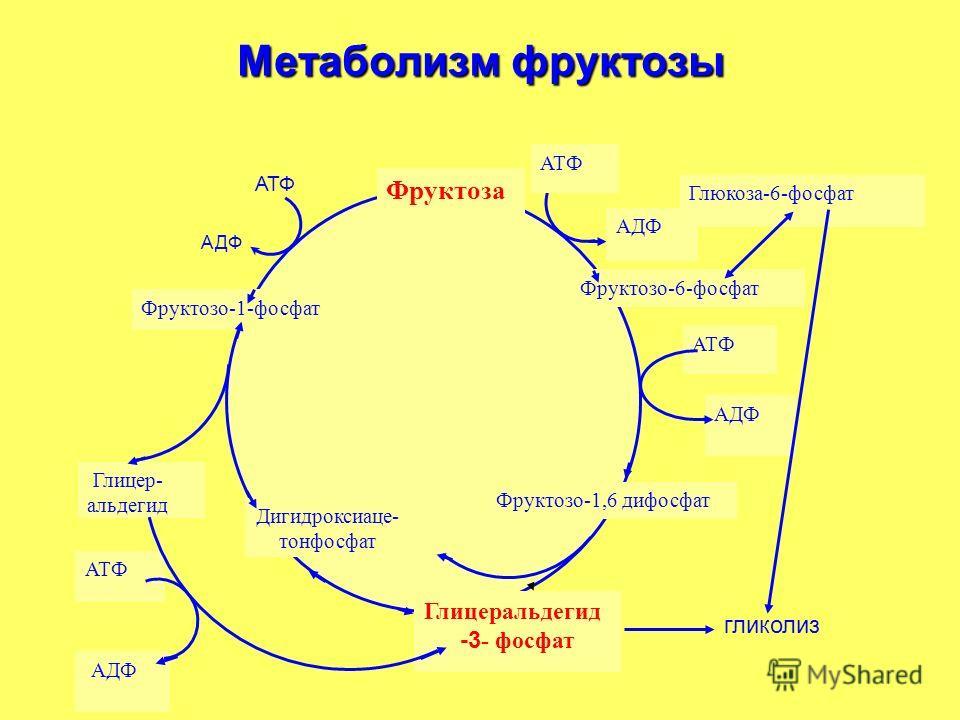 Метаболизм фруктозы АТФ АДФ АТФ АДФ Фруктоза Фруктозо-6-фосфат Глицеральдегид -3 - фосфат Дигидроксиаце- тонфосфат Фруктозо-1-фосфат АТФ АДФ Глюкоза-6-фосфат Глицер- альдегид Фруктозо-1,6 дифосфат гликолиз АТФ АДФ