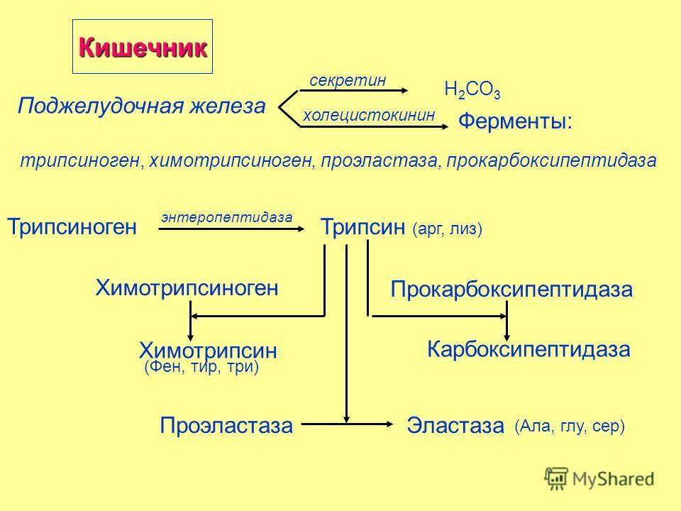 Ферменты: Поджелудочная железа холецистокинин секретин Н 2 СО 3 трипсиноген, химотрипсиноген, проэластаза, прокарбоксипептидаза Трипсиноген энтеропептидаза Трипсин (арг, лиз) ПроэластазаЭластаза Химотрипсиноген Химотрипсин Прокарбоксипептидаза Карбок