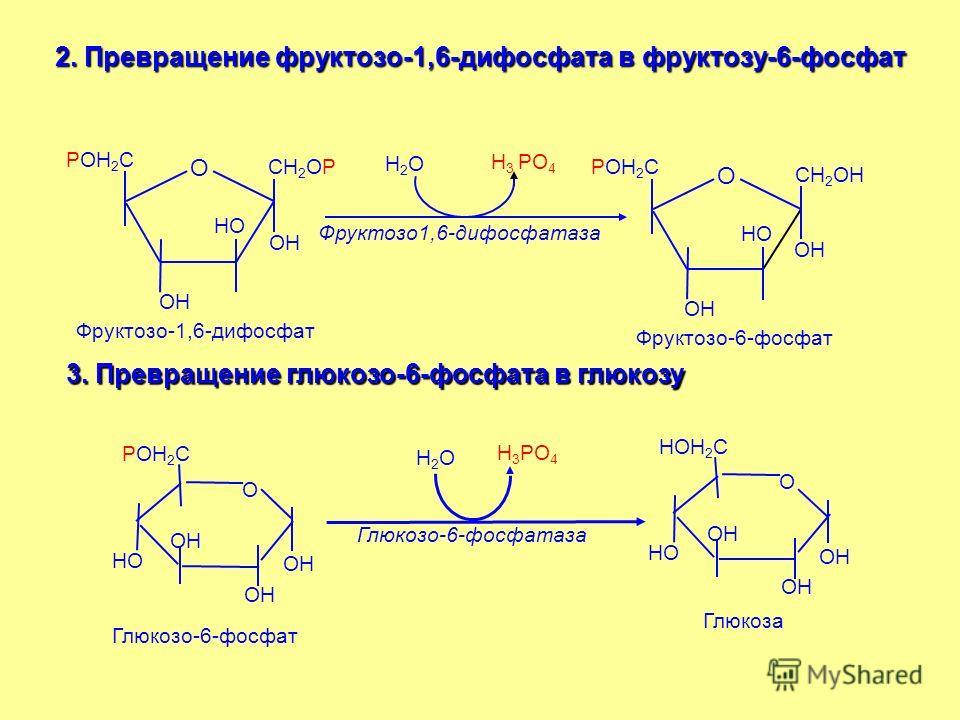 2. Превращение фруктозо-1,6-дифосфата в фруктозу-6-фосфат О РОН 2 С СН 2 ОР ОН НО ОН О РОН 2 С СН 2 ОН ОН НО ОН Н2ОН2О Н 3 РО 4 Фруктозо1,6-дифосфатаза Фруктозо-1,6-дифосфат Фруктозо-6-фосфат 3. Превращение глюкозо-6-фосфата в глюкозу Глюкозо-6-фосфа