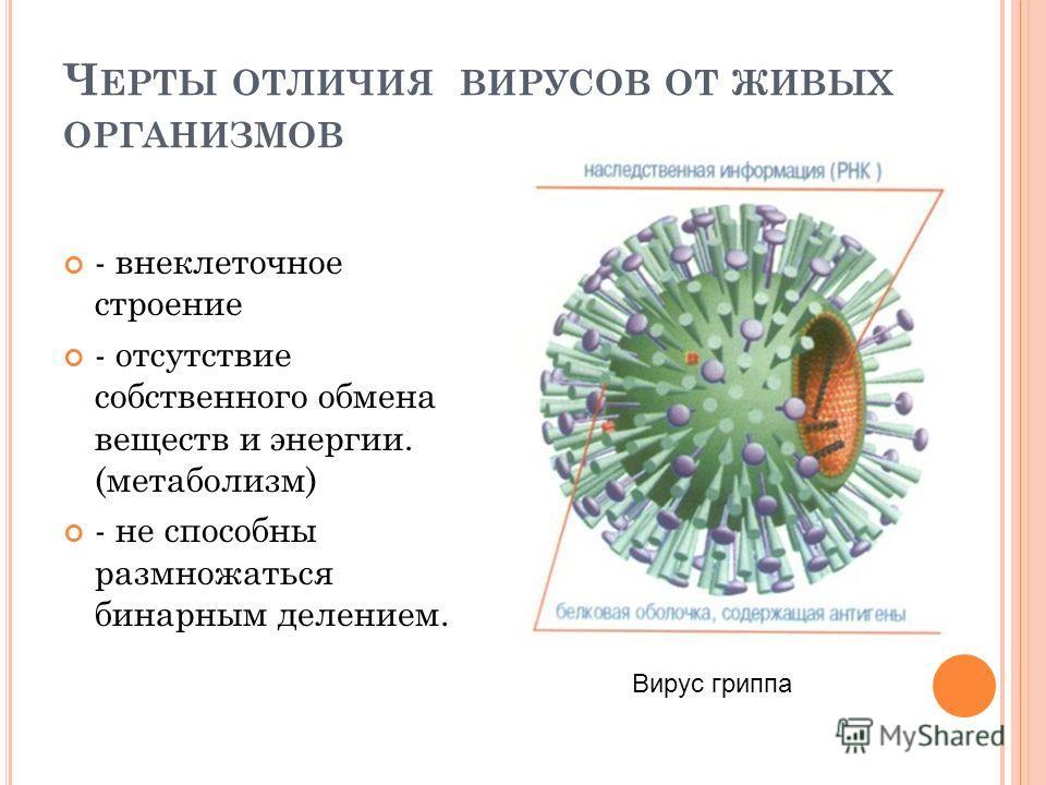 Ч ЕРТЫ ОТЛИЧИЯ ВИРУСОВ ОТ ЖИВЫХ ОРГАНИЗМОВ - внеклеточное строение - отсутствие собственного обмена веществ и энергии. (метаболизм) - не способны размножаться бинарным делением. Вирус гриппа