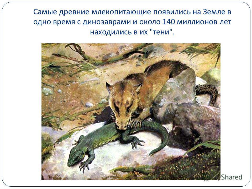 Самые древние млекопитающие появились на Земле в одно время с динозаврами и около 140 миллионов лет находились в их  тени .