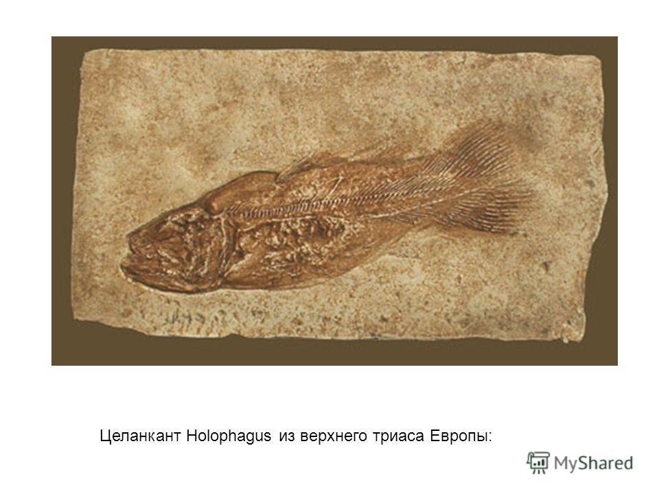 Целанкант Holophagus из верхнего триаса Европы: