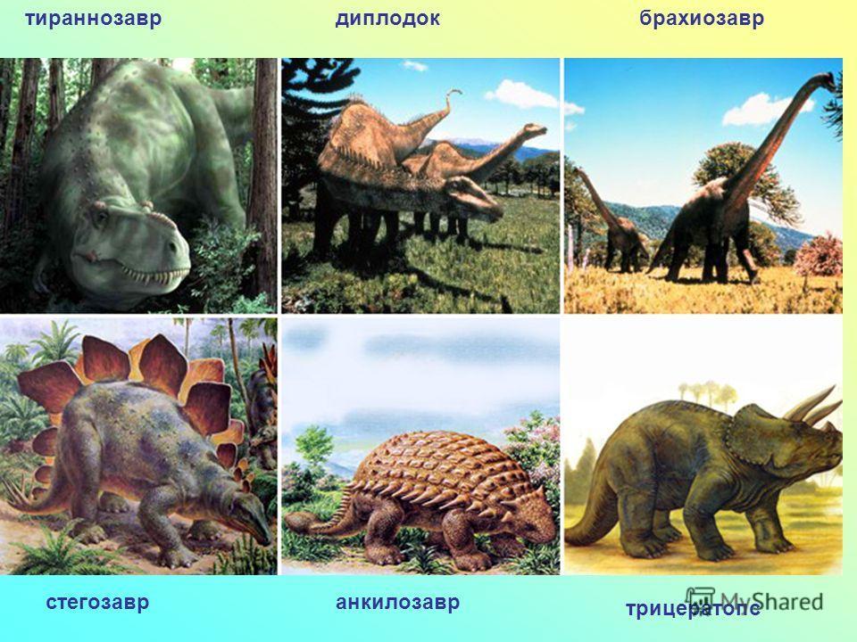 тираннозаврдиплодокбрахиозавр трицератопс анкилозаврстегозавр