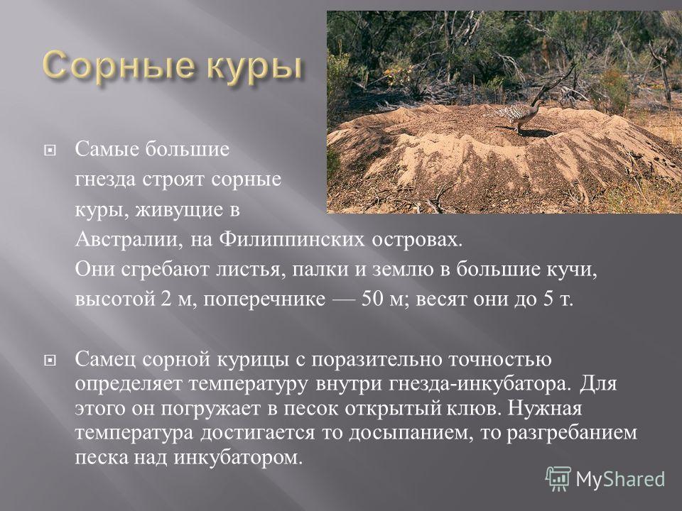 Самые большие гнезда строят сорные куры, живущие в Австралии, на Филиппинских островах. Они сгребают листья, палки и землю в большие кучи, высотой 2 м, поперечнике 50 м ; весят они до 5 т. Самец сорной курицы с поразительно точностью определяет темпе