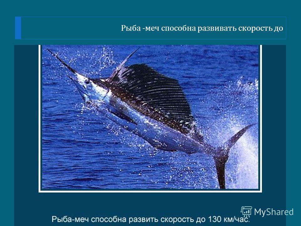 Рыба - меч способна развивать скорость до