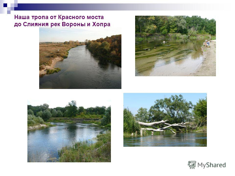 Наша тропа от Красного моста до Слияния рек Вороны и Хопра