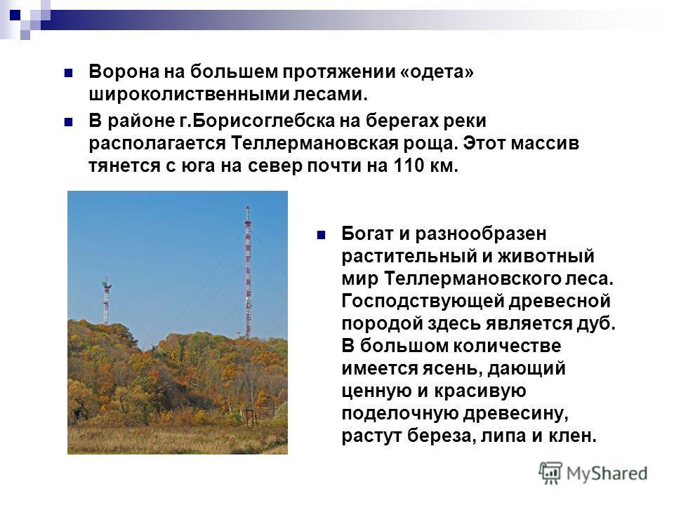 Ворона на большем протяжении «одета» широколиственными лесами. В районе г.Борисоглебска на берегах реки располагается Теллермановская роща. Этот массив тянется с юга на север почти на 110 км. Богат и разнообразен растительный и животный мир Теллерман