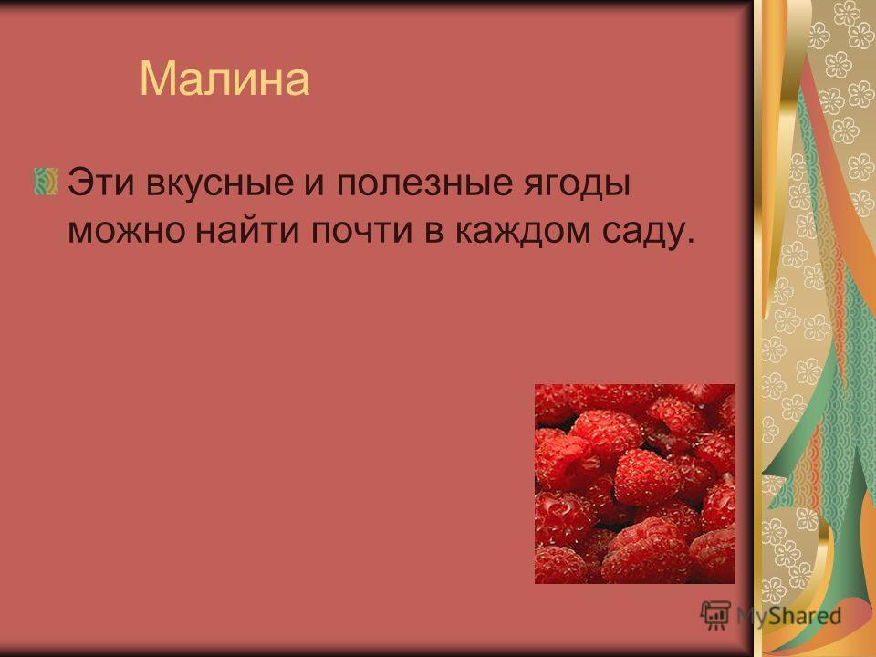 Малина Эти вкусные и полезные ягоды можно найти почти в каждом саду.